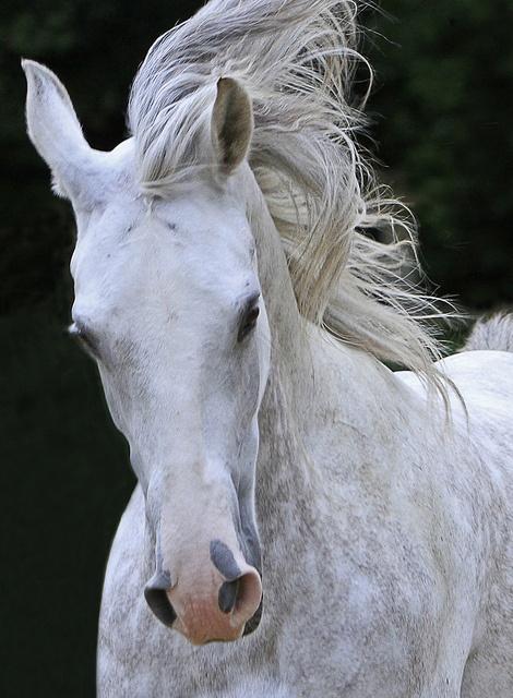 Beautiful Dappled Horse.
