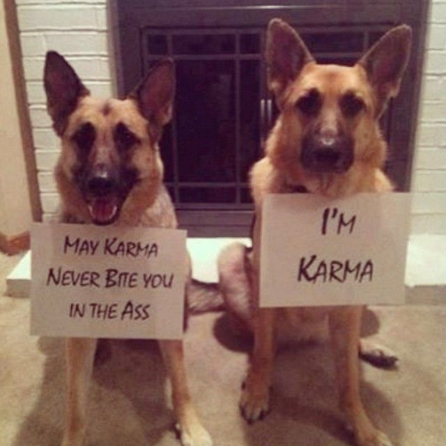 The Best Dog Names Ever