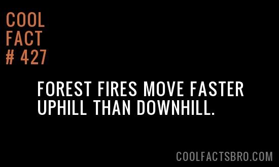 Cool Fact #427