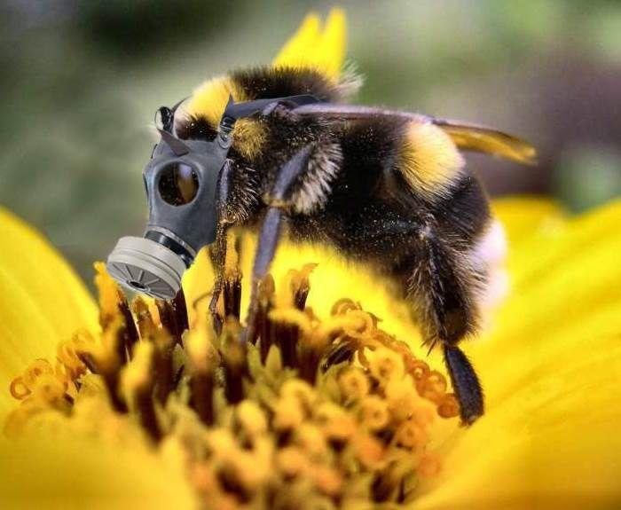 Stupéfaction : le Sénat autorise les pesticides néonicotinoïdes. Une calamité pour les abeilles et nous autres consommateurs-citoyens si mal protégés.