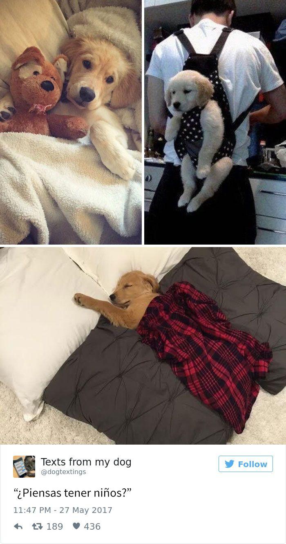 15+ Divertidos Tuits que te serán muy familiares si amas a los perros - Porque no se me ocurrió antes