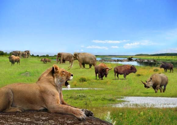 A British Pleistocene landscape during an interglacial with cave lion (Panthera…