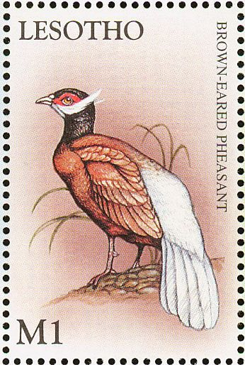 Brown Eared Pheasant stamps - mainly images - gallery format
