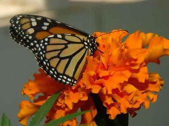 Butterfly Pavilion at Elkton Community Education Center in Eklton, Oregon. #TravelOregon