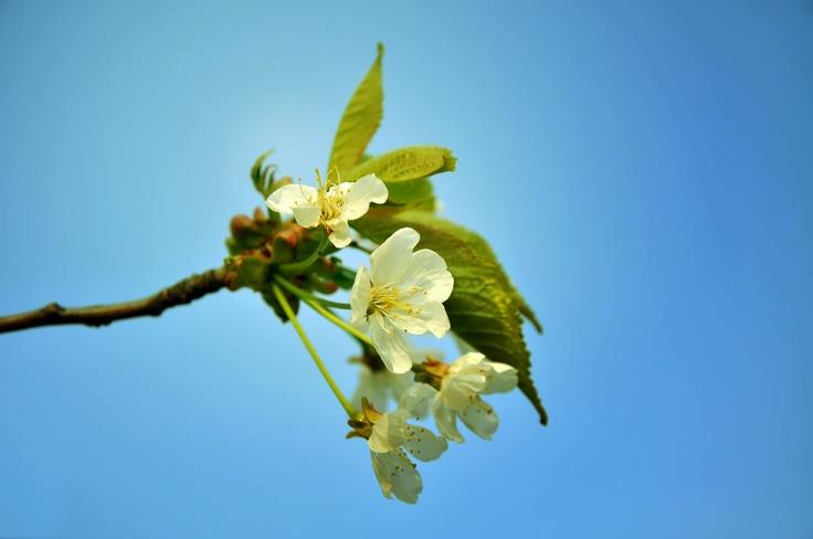 Springish