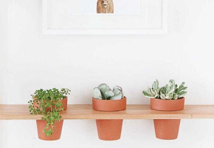Groen wonen   Hangend groen. Groen groen en nog eens groen. Als je nog geen plant in je huis hebt wordt het nu echt eens tijd. In woonbladen is veel terug te zien dat planten dé trend van nu is. Of je nu voor een cactus of een grote bos veldbloemen kiest, beide staan super in je interieur.Wat je nu ook veel ziet zijn hangende planten. In mooie porseleinen potten aan een touw, op een houten schommel of in glazen potten boven de eettafel. Er zijn nog zoveel verschillende mogelijkheden op dit…