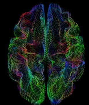 The three-dimensional shape of the cerebral cortex -- the wrinkled outer layer of the brain controlling many functions of thinking and sensation -- strongly correlates with ancestral background, researchers have found. The study opens the door to more precise studies of brain anatomy going forward and could eventually lead to more personalized medicine approaches for diagnosing and treating brain diseases.