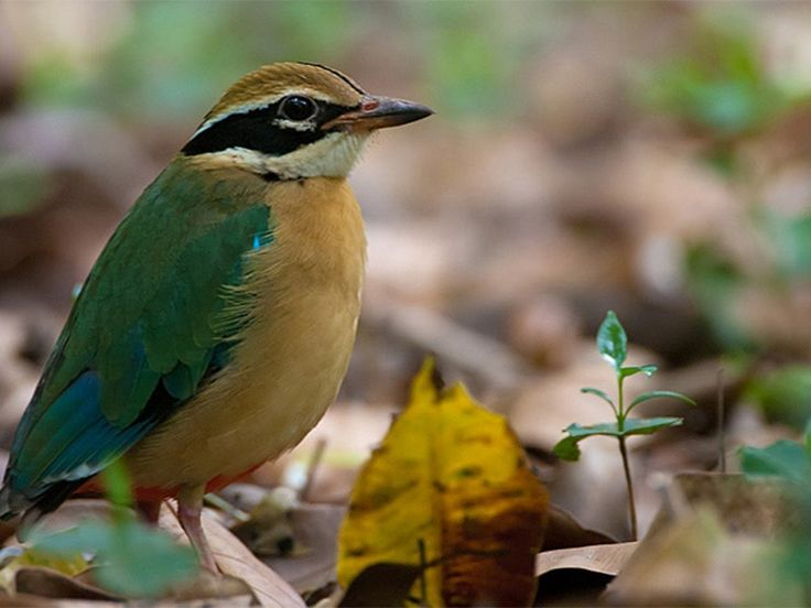 Thattekad Bird Sanctuary - in Kerala, India