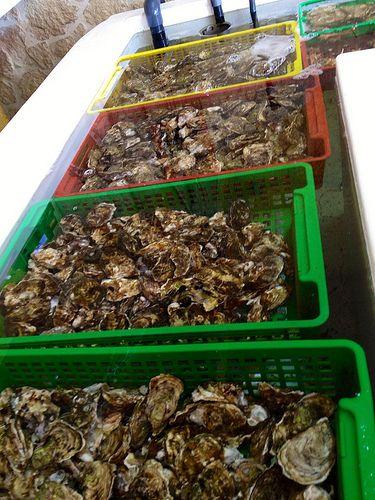 Fresh oysters from the Etang de Leucate