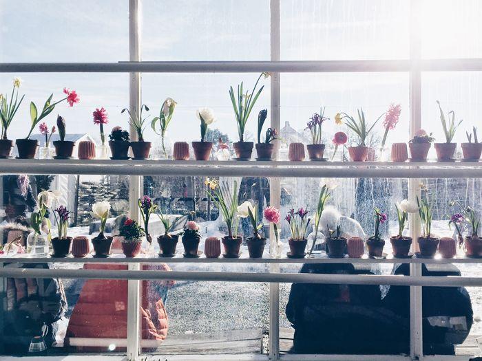 hylla-i-fonster-krukor-vaxter-rosendals-tradgardar