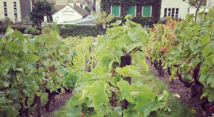 """Le vignoble du """"Clos Montmartre"""" - Fête des Vendanges"""
