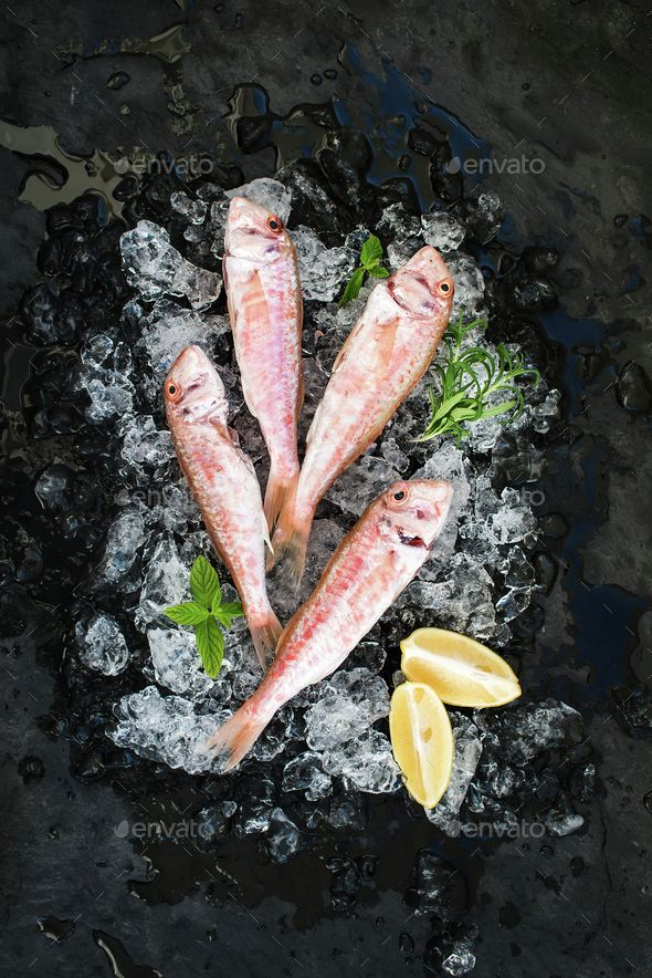 Raw Red Mullet fish with lemon, mint and rosemary on chipped ice over dark stone backdrop by sonyakamoz. Raw Red Mullet fish with lemon, mint and rosemary on chipped ice over dark stone backdrop, top view