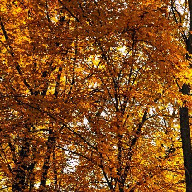 . . Couleurs dautomne #vidy . . . Suivez mon autre compte Instagram: @fungi_of_switzerland . . . #arbres #feuilles #balade #vidy #vaud #randonnee #soleil #sun #automne #couleursdautomne #lausanne  #suisse #schweiz #svizzera #switzerland #swisslife #discoverswitzerland . . .