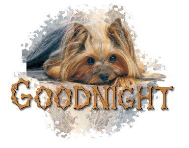 Sweet Dreams ☺️