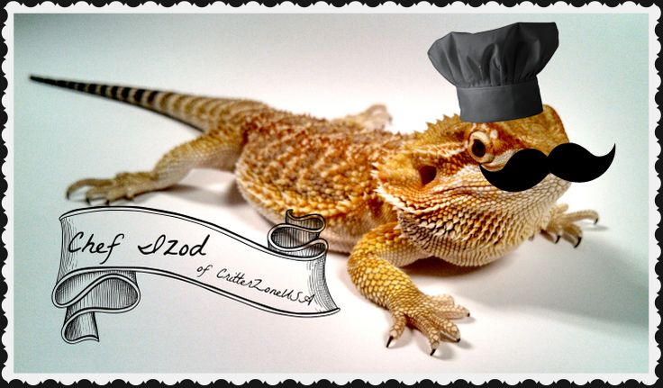 24 best images about Bearded Dragons Rule the World on ...