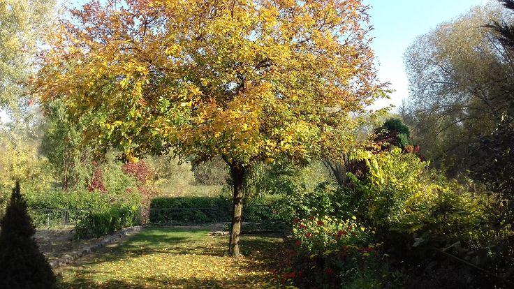 Ősz – Autumn - - Az ősz csodálatos évszak.  Az idő, amikor még utoljára mindent elönt a természet szépsége. Mintha a természet megmentett volna nekünk egy finálét. (Németh György)