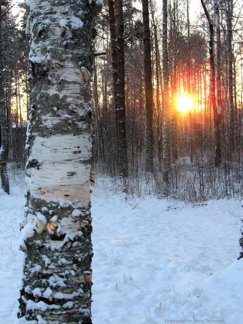 Metsä, Photographer Taina Tervonen
