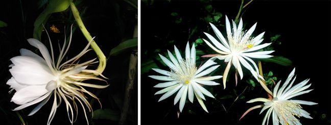 Τα σπανιότερα λουλούδια του πλανήτη   Newsbeast