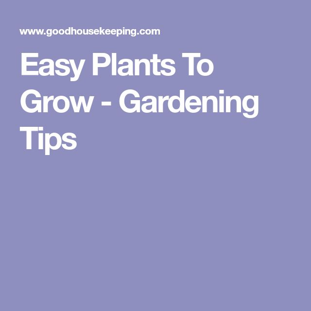 Easy Plants To Grow - Gardening Tips
