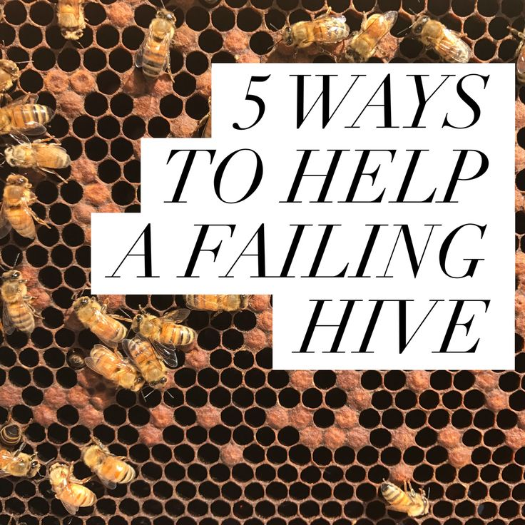If you are inspecting your hives regularly, you can usually see the end coming. When a colony starts to fail, it can be challenging to figure out why, let alone solve the issue. So, what can a beek…