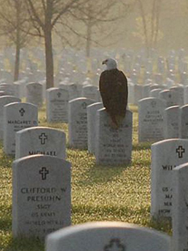 This beautiful photo was taken in 2011 at Fort Snelling National Cemetery in Minneapolis. The eagle had landed on the grave of Sgt Maurice Ruch, enlisted in the US Army Air Corps in Deember of 1941. Known for his keen eye, he became a rifle marksman and was stationed in the Aleutian Islands. He served four years in the military and earned a bronze star. #WWII #History