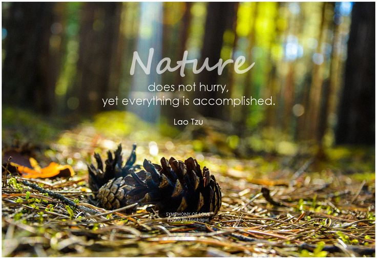 Nature does not hurry #quote #nature