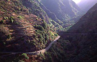 La Palma Island (Canary Islands) The Los Tilos ravine