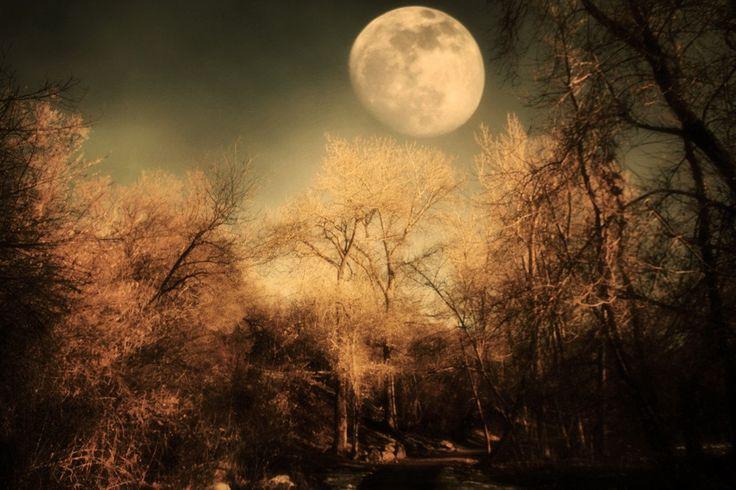 Dark Trees and  Moon 8x12 Fine Art Metallic Photo