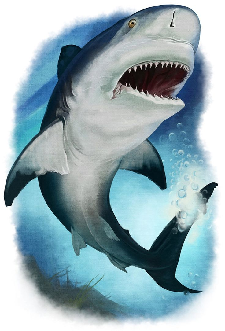 Art illustration - Bull Shark - Oceans & freshwater - (Carcharhinus leucas) Is a species of one of the few sharks that draws the estuaries to reach fresh water. It can measure up to 3.4 m in length. It feeds on all kinds of animals, including other sharks. It can be dangerous for the human being. The ability of this shark to enter fresh water is thanks to a special gland they have in the kidney that allows them to contain salt water in their body and expel fresh water.
