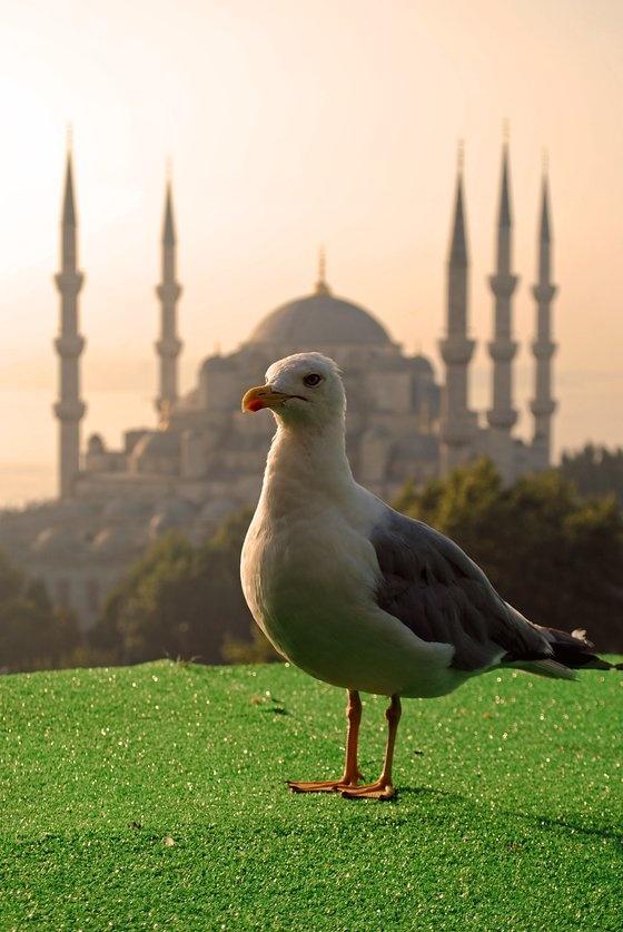 buongiorno Istanbul