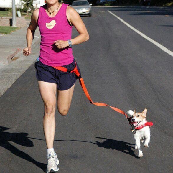 Guinzaglio per fare jogging con il proprio cane senza usare le mani. Regolabile e disponibile nei colori: rosa azzurro arancione nero rosso verde.  990 comprese s.s. Consegna: 30-60 giorni. #pet #dog #cani #puppy #cane #guinzaglio #jogging #sport #dogleash #leash #shopping #color #fitness #workout by olivettoblu