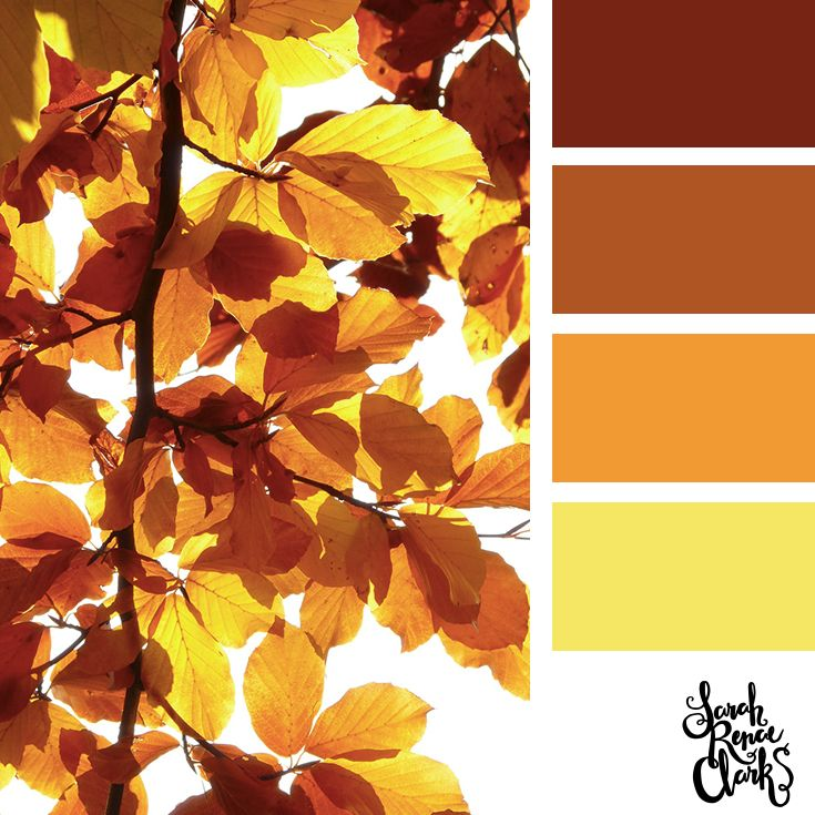 102200 Best Color Therapy Images On Pinterest Colors