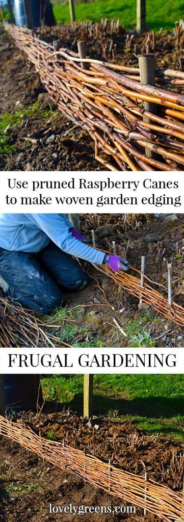 This easy and frugal project shows you how to weave pruned raspberry canes into attractive garden edging #growraspberries #raspberrycane #gardenedging #wattle
