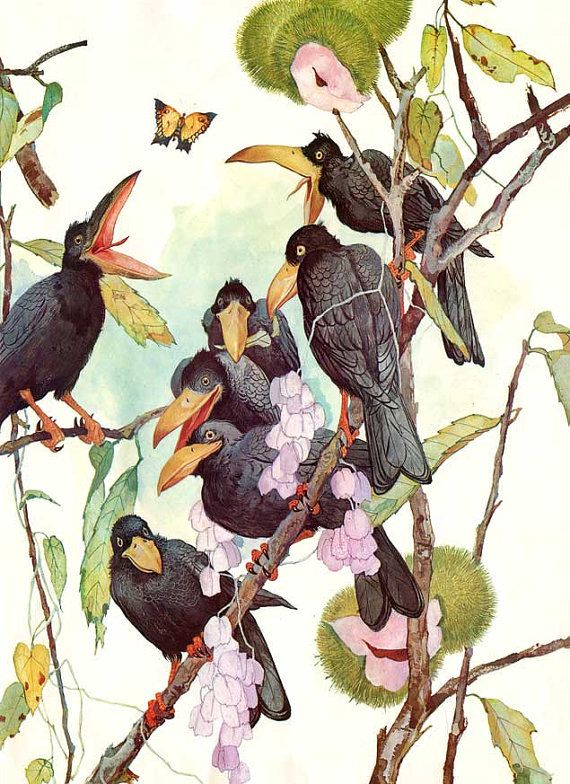 Vintage 1965 Large Group of Crows in Flowering Tree Branches Illustration Bookplate Print