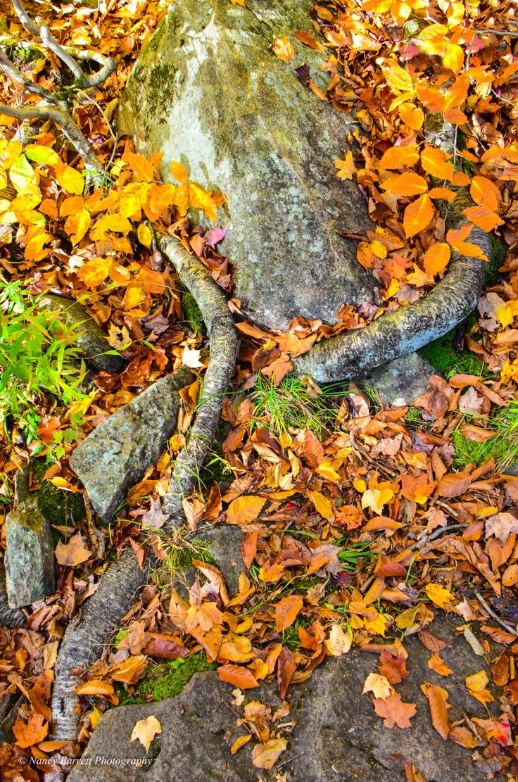 Rocks and roots, Oxtongue  River