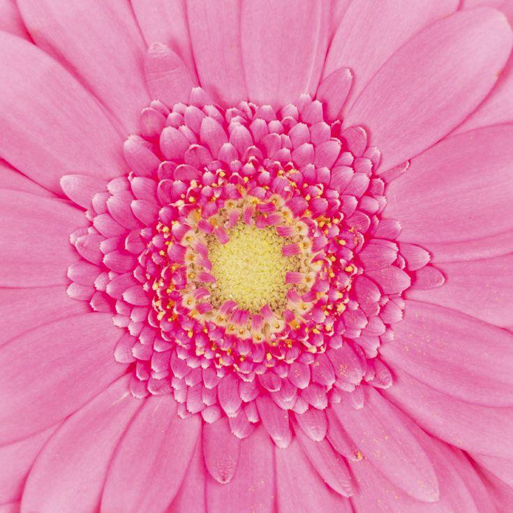 Si el rosa les queda tan bien a las flores, ¡también te queda bien a vos!