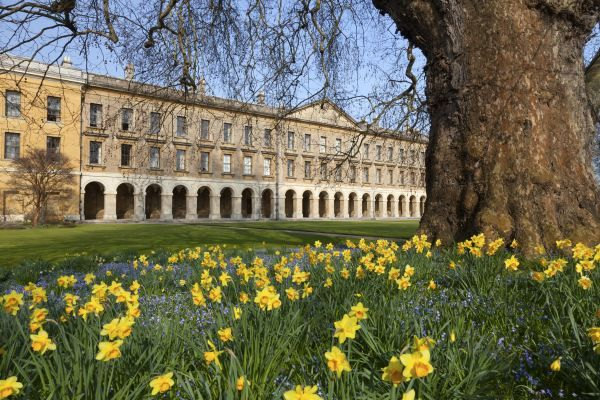 Magdalen College Oxford- the New Building, spring afternoon, amidst a riot of daffodils and bluebells