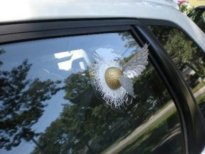 Snitch landed in the car window!