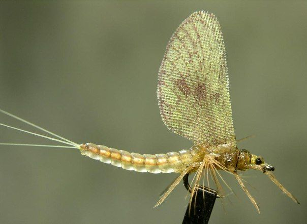 Fly Tying Russia (Вязание мушек, Семга, Кумжа)