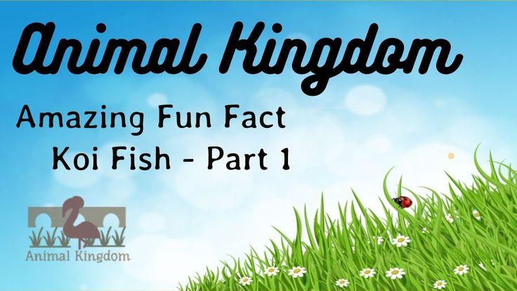Animal Kingdom - Amazing Fun Fact about Koi Fish  – Part 1
