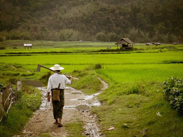 Kyaukme, Myanmar, Sagaing, Myanmar - A day in the life of a farmer in Myanmar