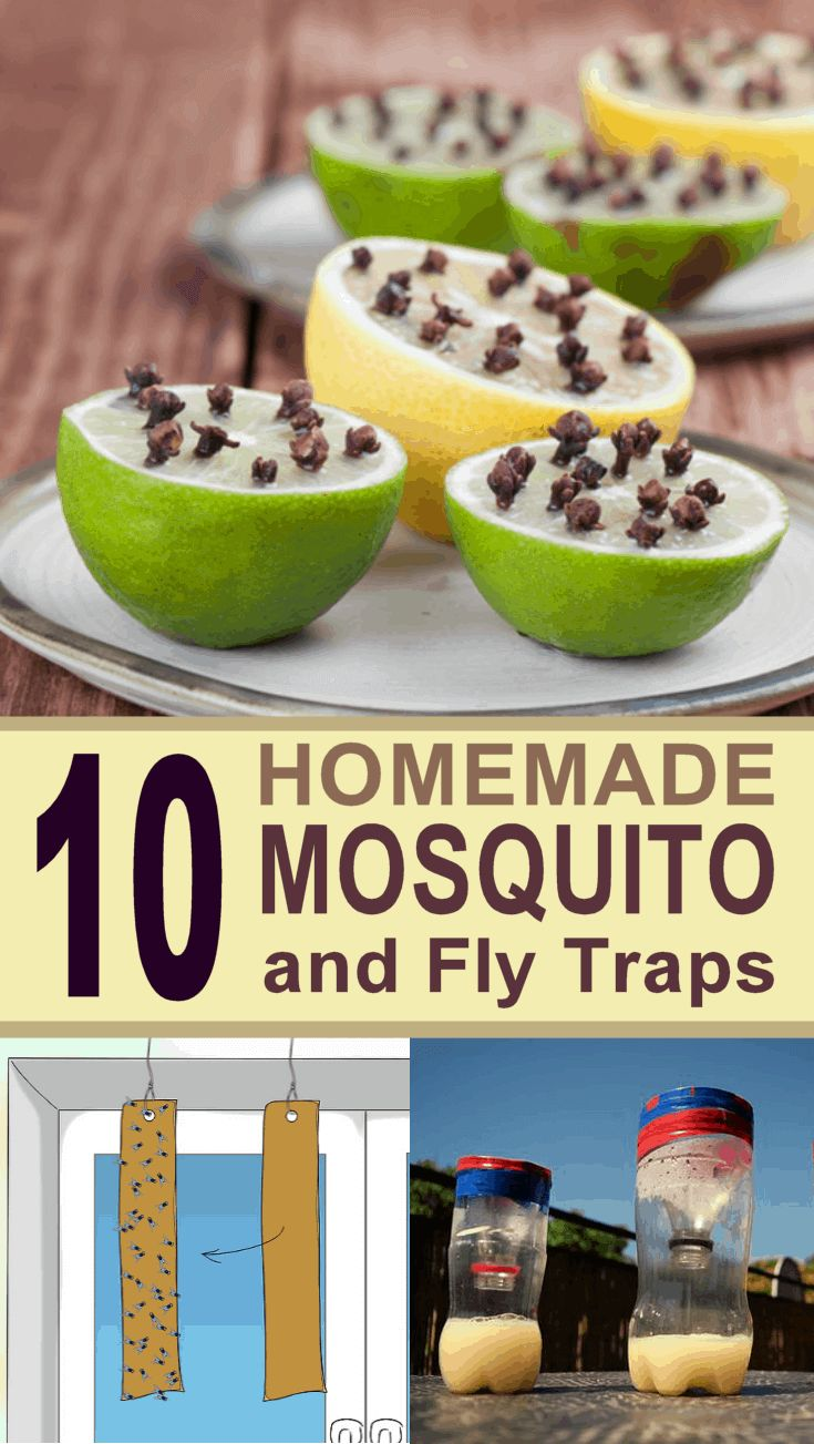 10 Ingenious DIY Mosquito and Fly Traps Mosquito trap