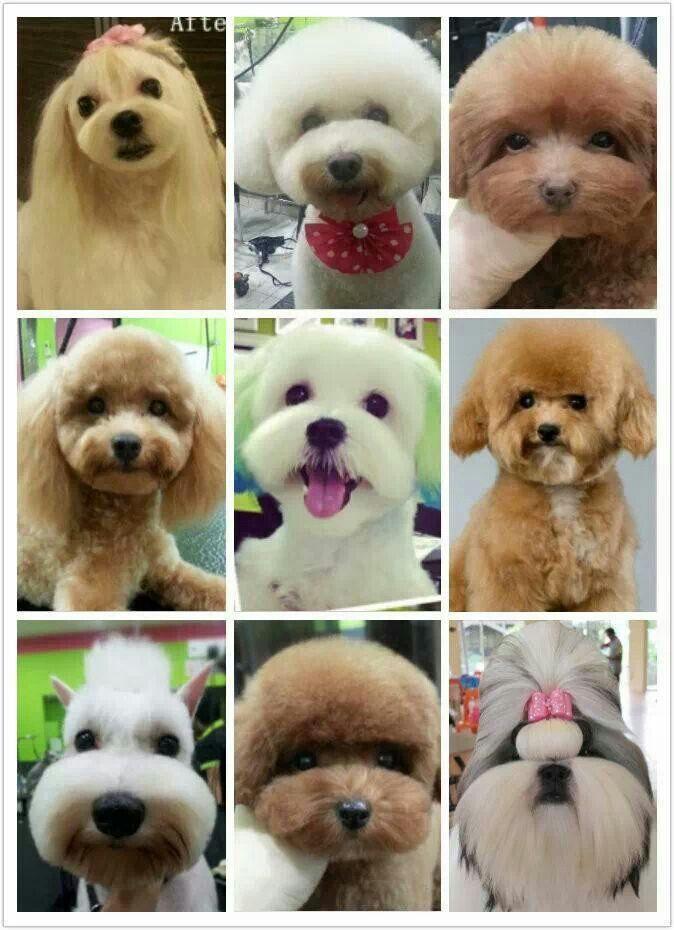 More Asian inspired pet trims so cute♥♥♥