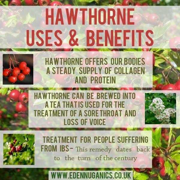 hawthorne-pic-finshed