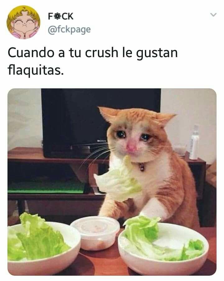 Pin De Dranitaalvarez En Amor Memes De Gordos Memes De Comida Memes