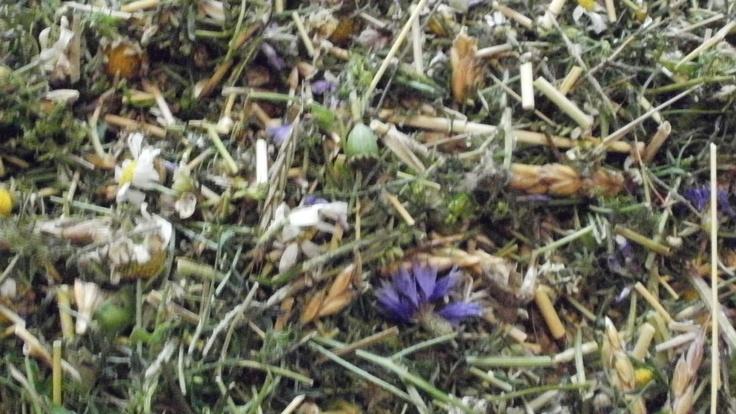 Chopped hayflowers