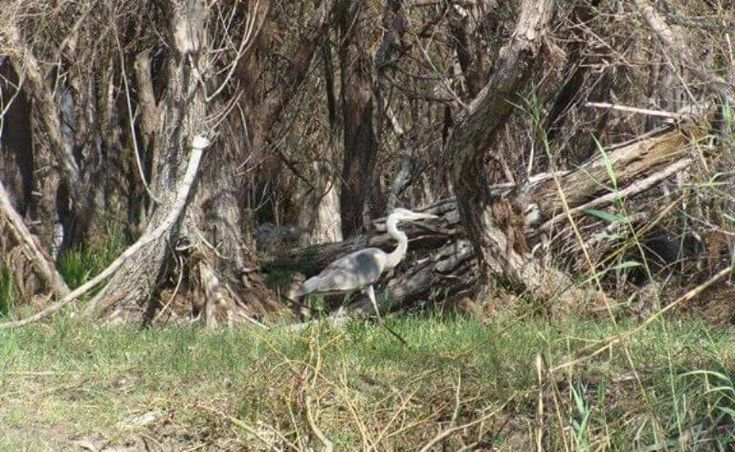 Discovering rare birds - Montenegro Pulse