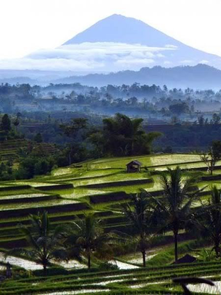 ma lovely country, Indonesia...