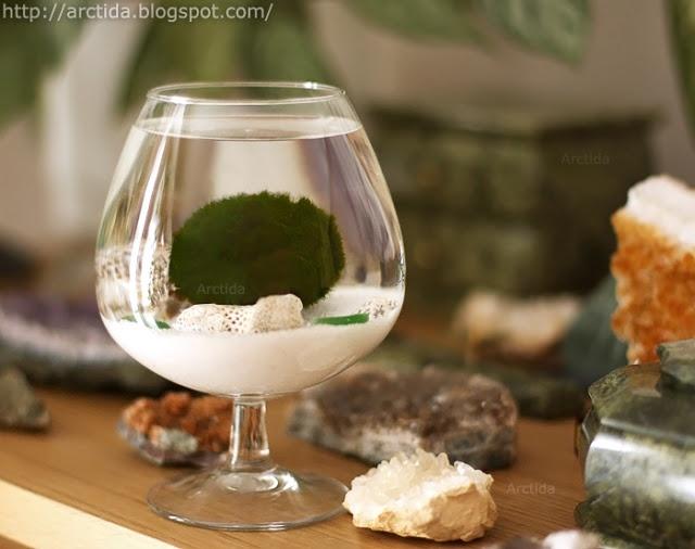 Arctida s creations diy tutorial marimo moss ball mini for Moss balls for fish tanks