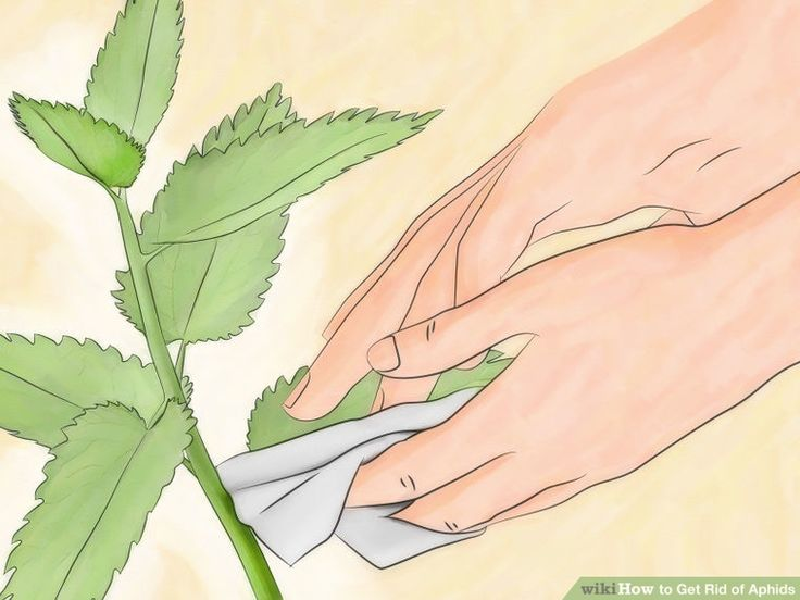 Image titled Get Rid of Aphids Step 5